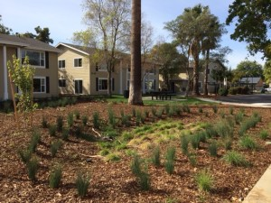 Greenway Drought Tolerant Landscaping 2015