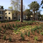 Mutual Housing at Greenway Landscaping